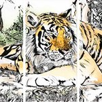 Tiger (3 Teile) 2017Maple Lane Wildlife Resort, Topeka